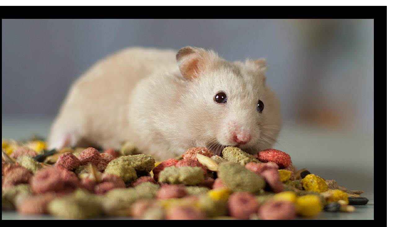 Types of Hamster Food -Which One Is the Best ?
