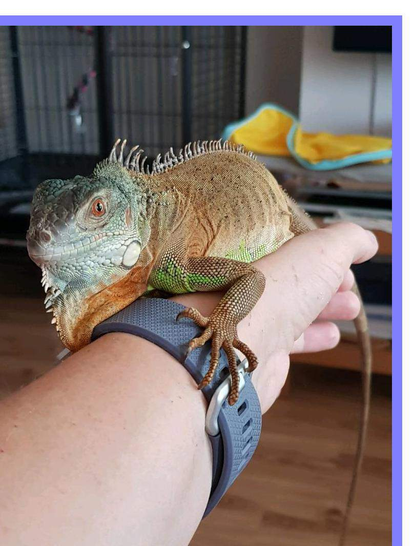 humidity for iguana – How to keep ?