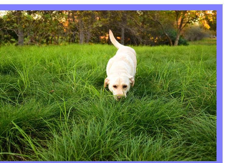 How To Train A Dog – Tips That Work