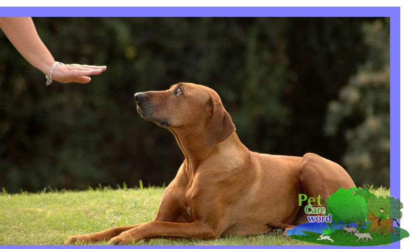 Obedience Training For Dogs – Is obedience training good for a dog?
