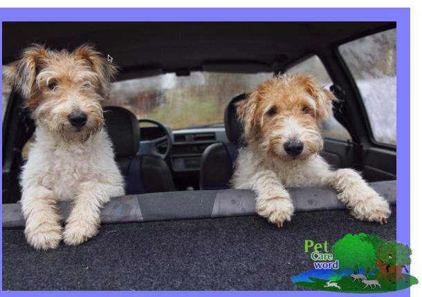 Traveling with a Pet by Car – How to