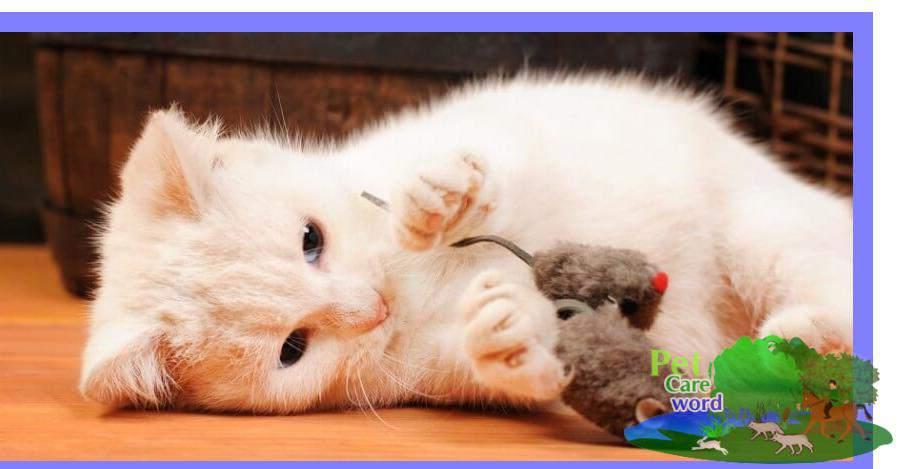 Choosing Toys For Your Kitten Or Cat