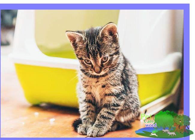 Litter Box Training For Your New Kitten