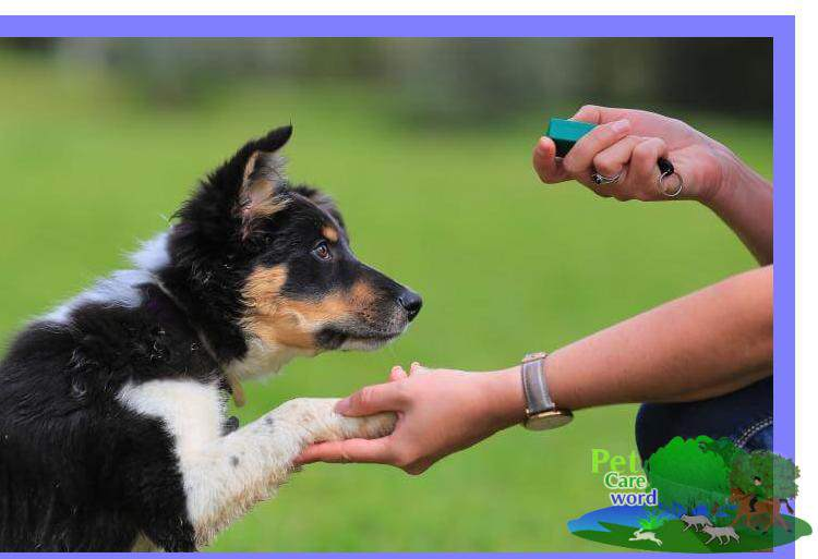 Dog Obedience Tips: 10 Things You Must Avoid When Training Your Dog