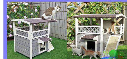 Outdoor Cat House