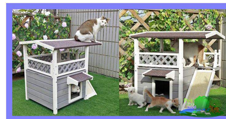 What You Should Really Know About Outdoor Cat House