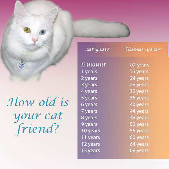 Cat Years To Human Years – How old is your cat ?
