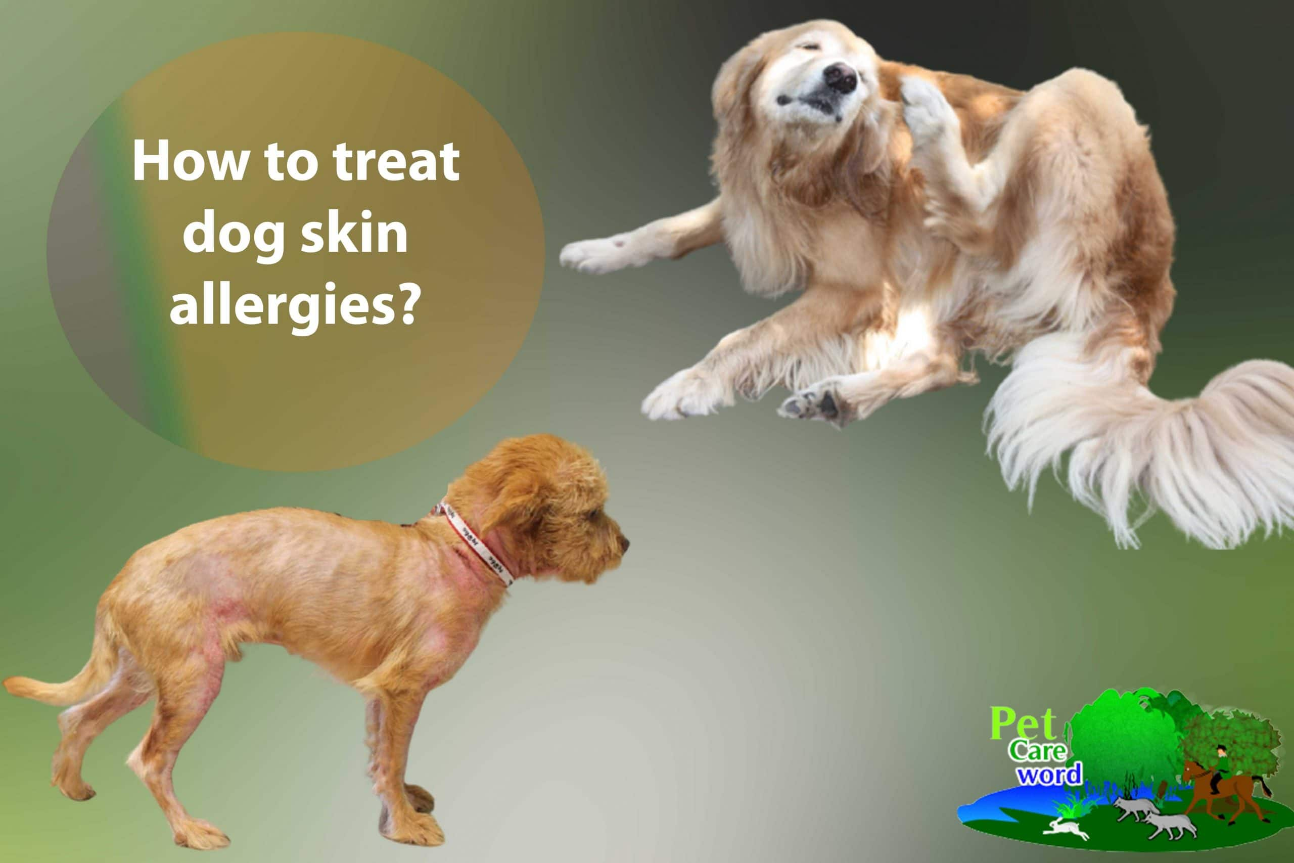 How to treat dog skin allergies?