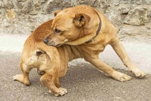 Types of Allergies in Dogs