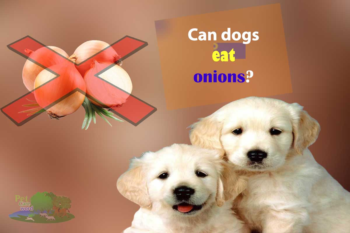 Can dogs eat onions? Are onions safe?