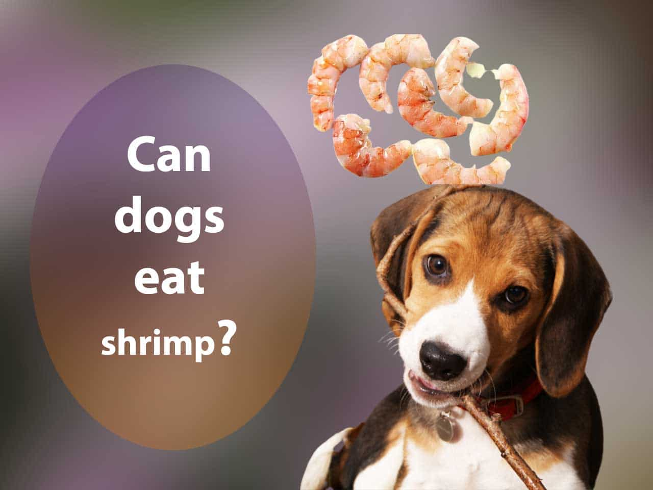 Can dogs eat shrimp? Is Shrimp Bad For Dogs?