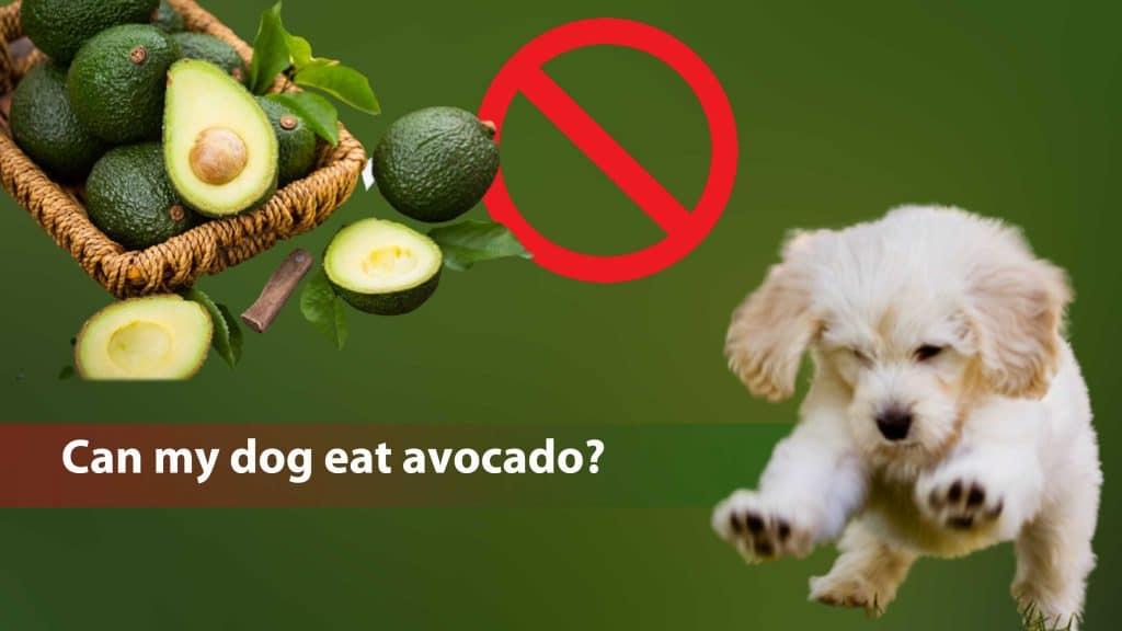 can my dog eat avocado
