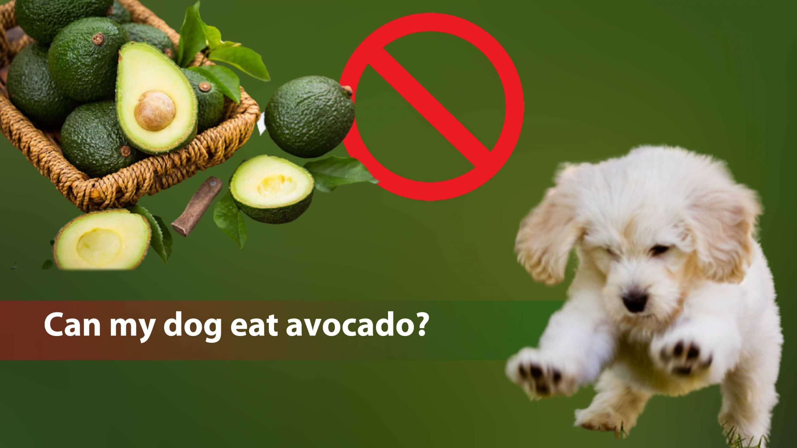 Can my dog eat avocado? Is it safe?