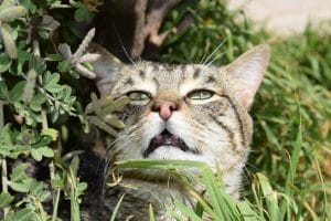 Why do cats cough