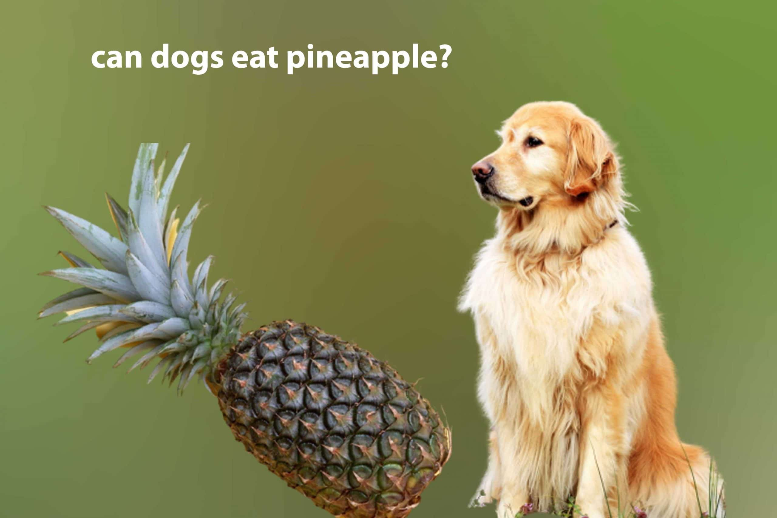Can my dog eat pineapple? Is it safe ?