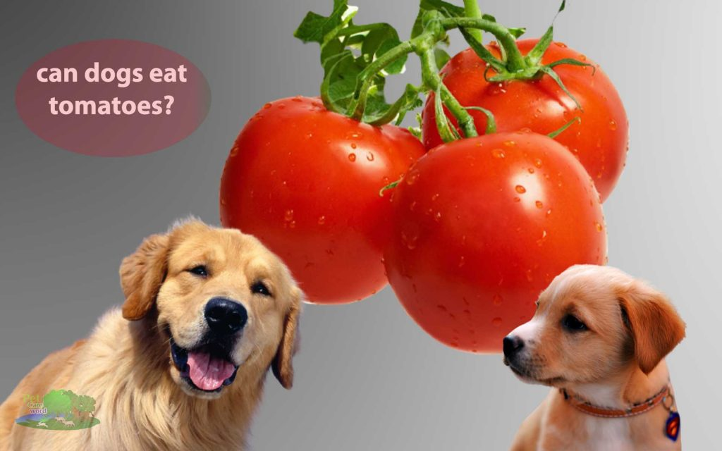Can dogs eat tomatoes