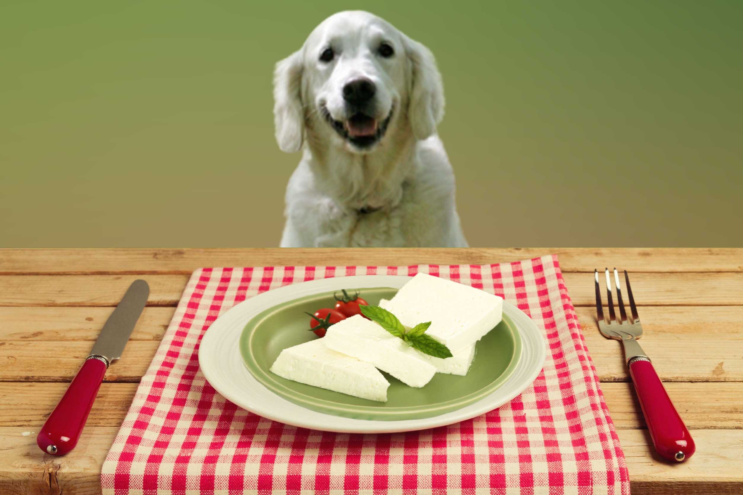 Can dogs eat cheese? Is cheese bad for dogs?
